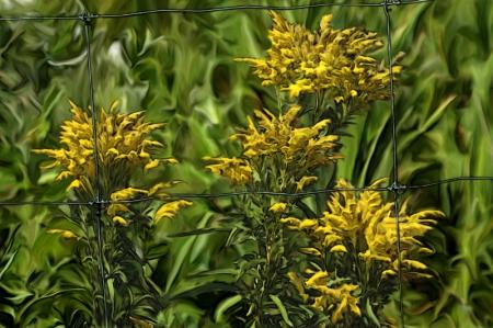 Fleurs sauvages du Québec