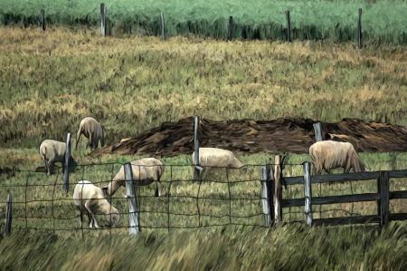 troupeau dans le bas saint-laurent