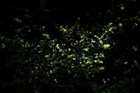 Rayon de soleil sur les fougères dans le sous-bois
