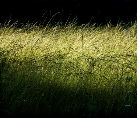 Herbes folles dans la lumière