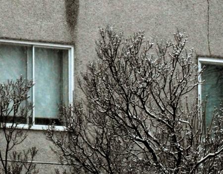 Fenetre et arbre enneiges