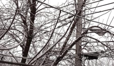 Arbres et fils sous la neige