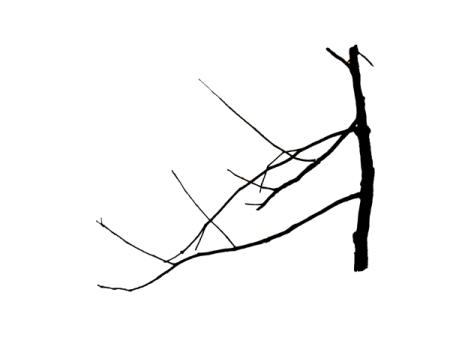 Haut contraste branches 2
